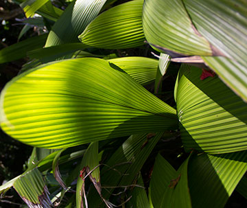 leaf-patterns